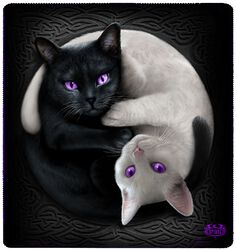 Yin Yang Cats fleecetæppe